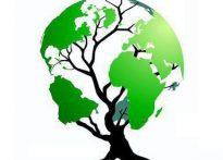 🎄درخت، هویت سبز زندگیست…🎄